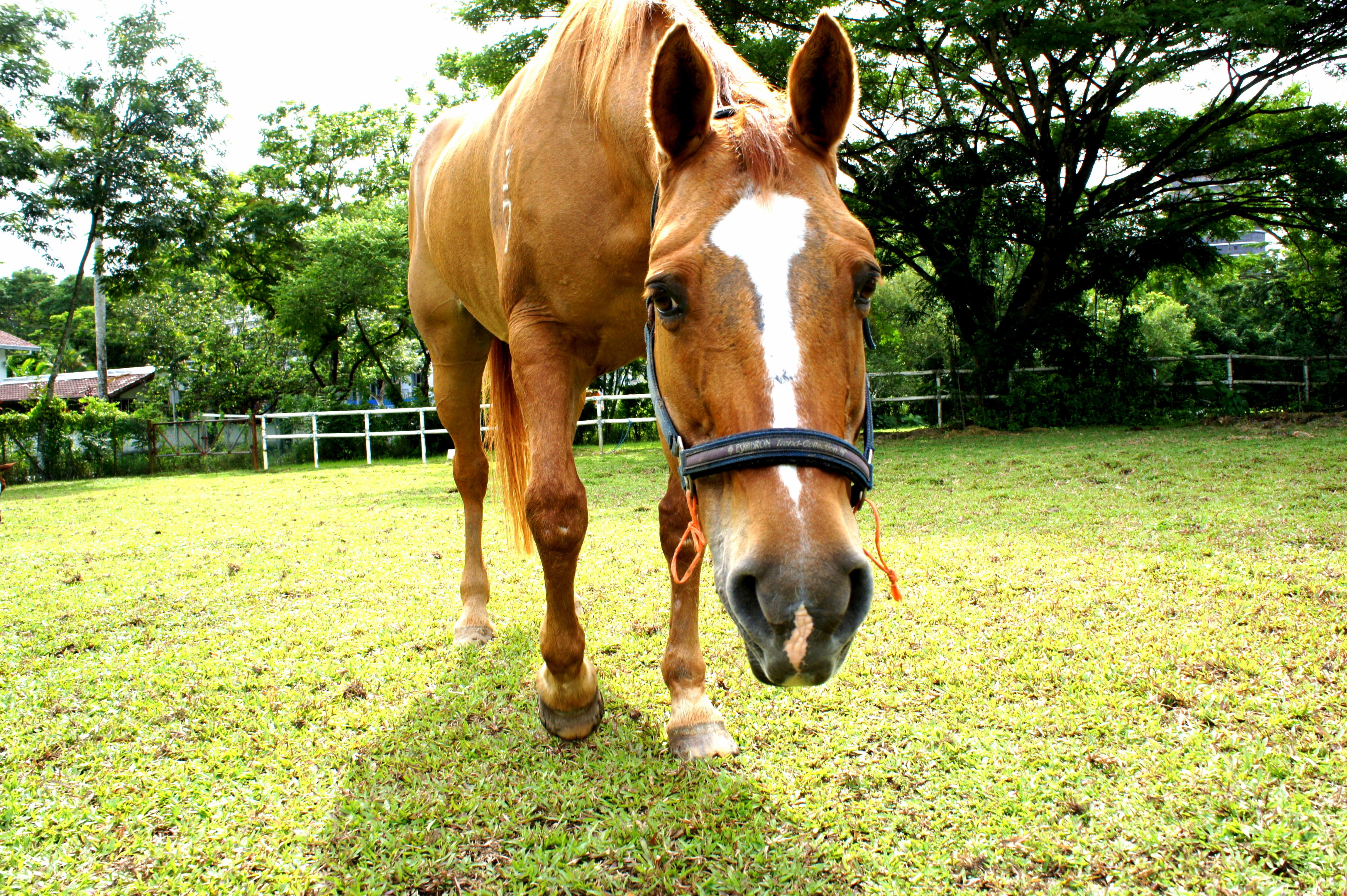Buckay, RDA Therapy Horse