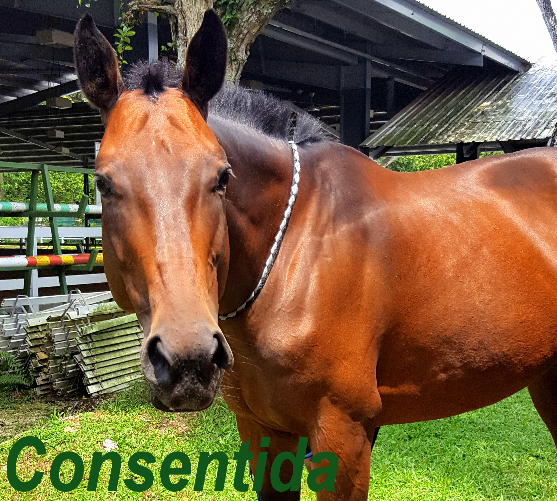 Our Horses And Ponies Rda Singapore